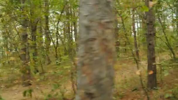 Tracking camera of a young man running jogging in autumn park, wood, forest, 4k slow motion