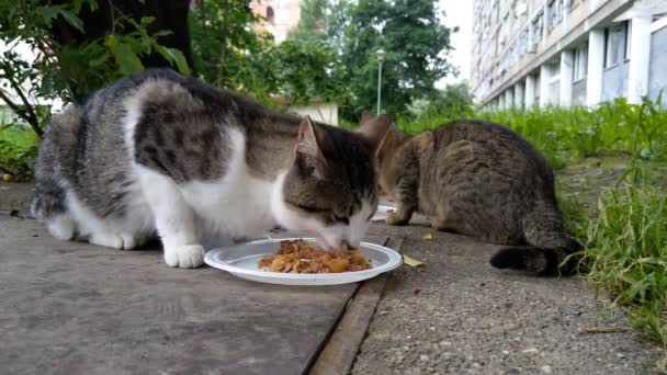Street cats eating their breakfast