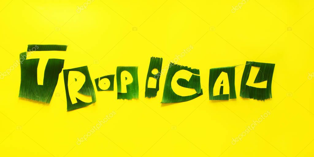 Word TROPICAL letters from green tropical leaves