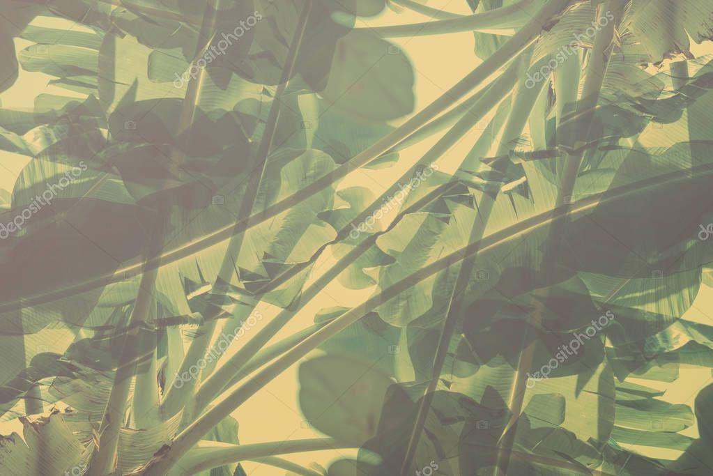 Natural geometrical decor art palm Pattern Toned