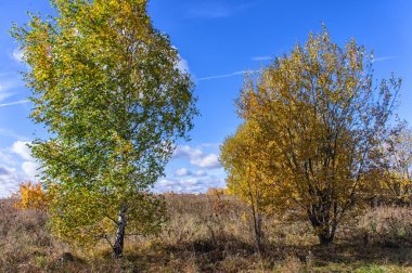 Autumn landscape in fine weather in the southeast of the Moscow region