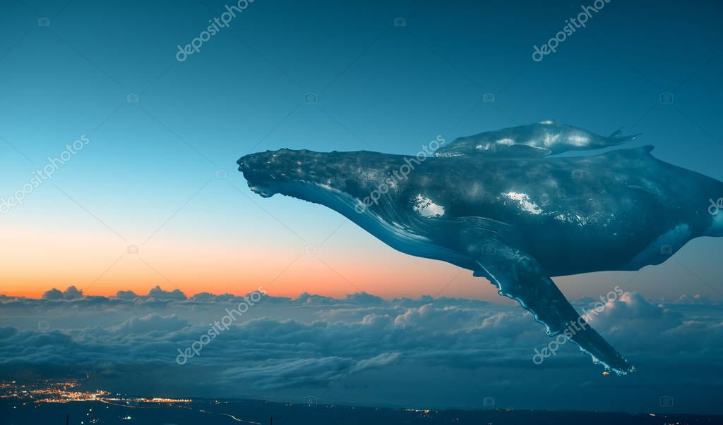 Whales Family, baby and mother in The Sky
