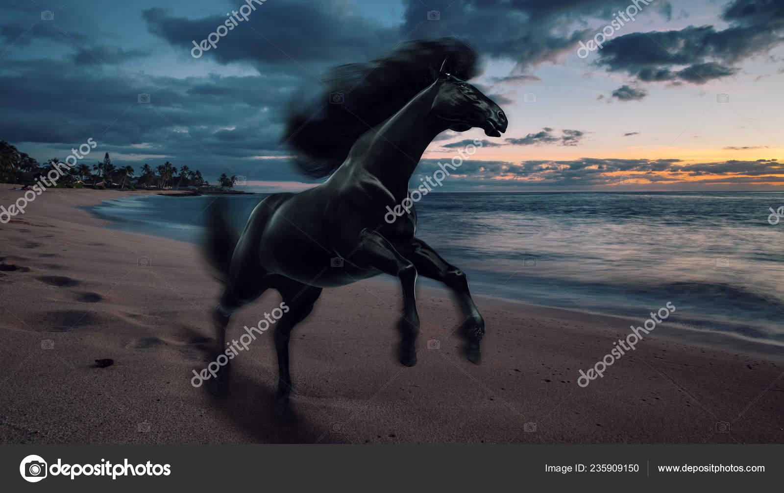 Black Running Horse Sunset Beach Stock Photo C Vitaliy Sokol 235909150