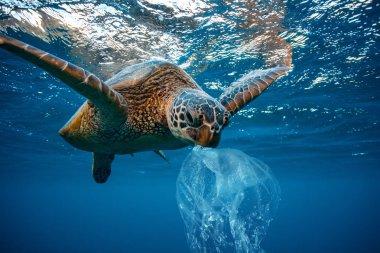 Water Environmental Pollution Plastic Problem Underwater animal