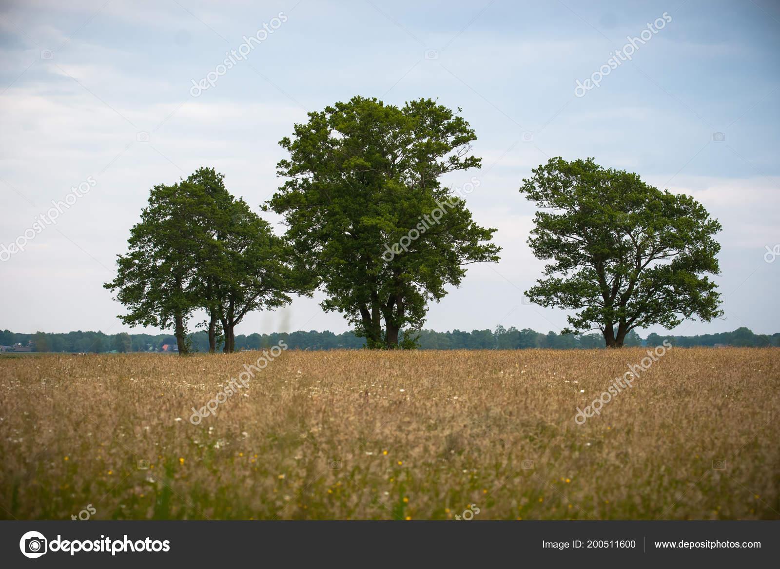 Vistas Sobre Pasto Natural Con Hierbas Flores Silvestres Vegetación