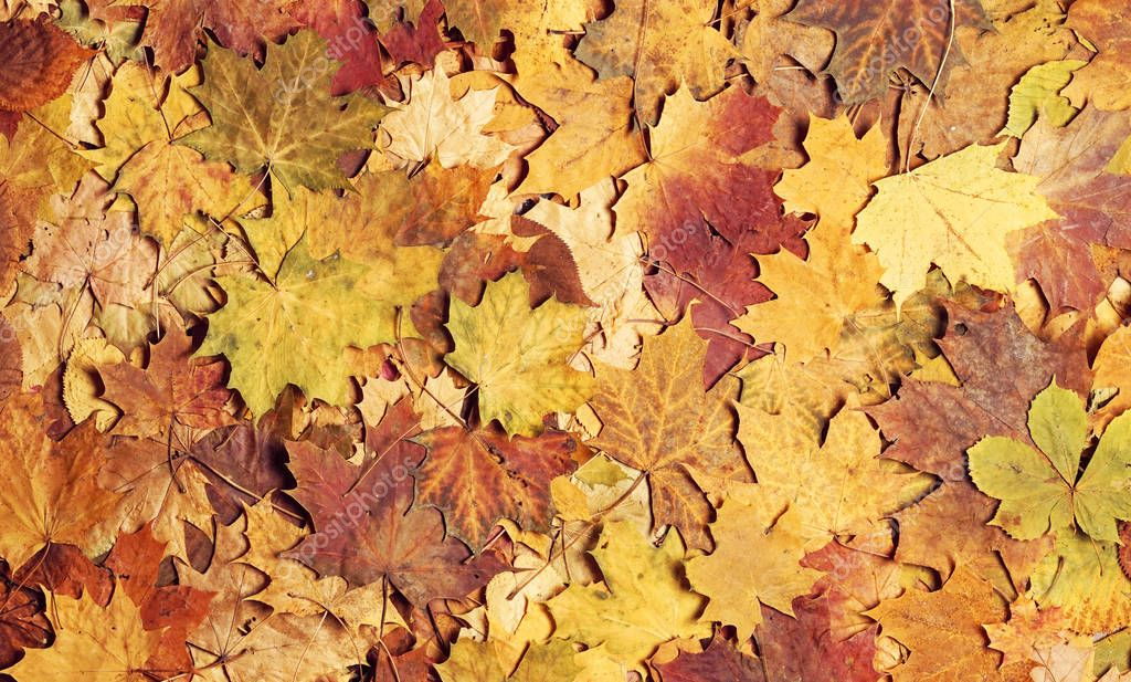 Autumn leaves in forest. Seasonal background pattern.