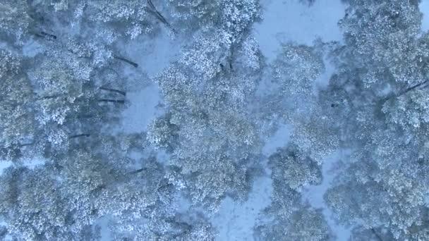 Krásné zimní les. Letecký pohled od dron.
