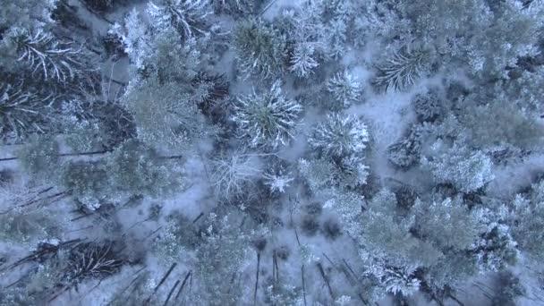 wunderschöner Winterwald. Bäume und Schnee. Luftaufnahme aus der Drohne.