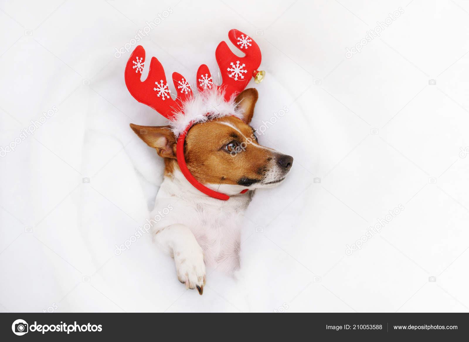 a579414150f6d Unhappy Dog Santa Hat Beard Showing Teeth Lying Snow Christmas — Stock Photo