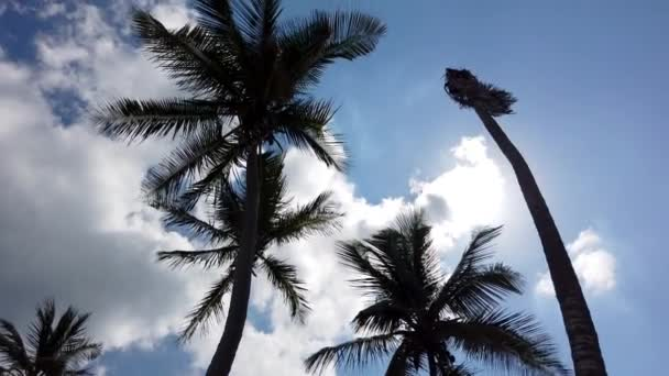 Blue cloudy sky with tropical palms.