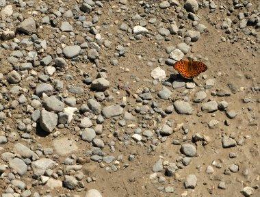 orange butterfly sitting on stones