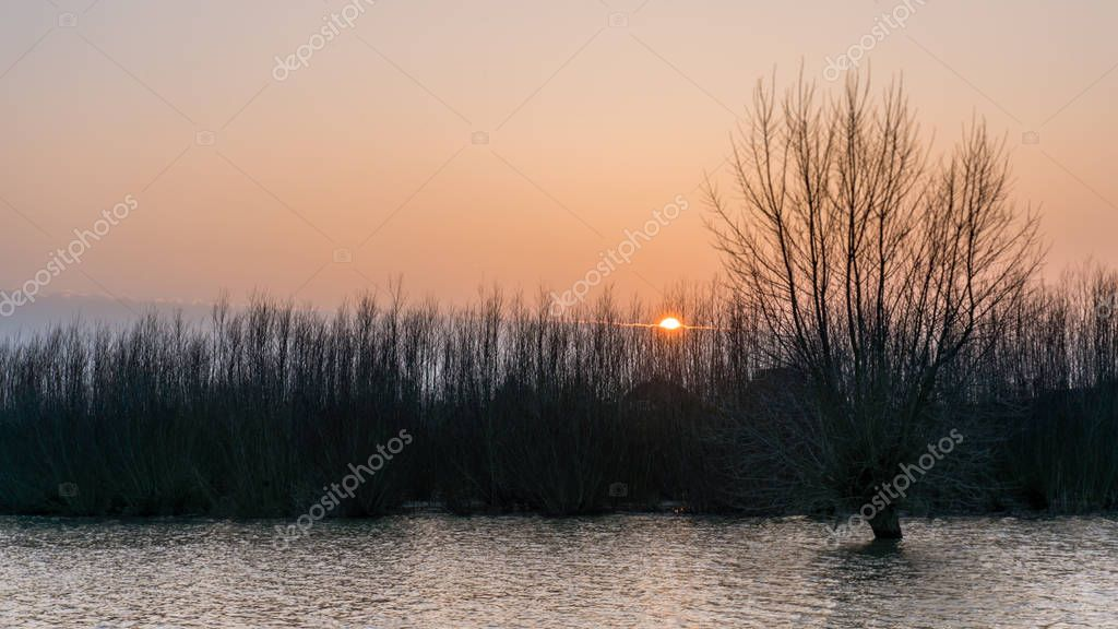 Hardinxveld, Netherlands - 2018-01-14: pollard willow and coppices in flooded river forelands of river Boven Merwede at high water tide - Nature Reserve de Avelingen at sunset.