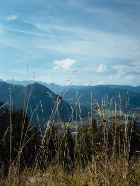 "Картина, постер, плакат, фотообои ""красивый вид на горы и небо через траву санкт-петербург"", артикул 286974120"