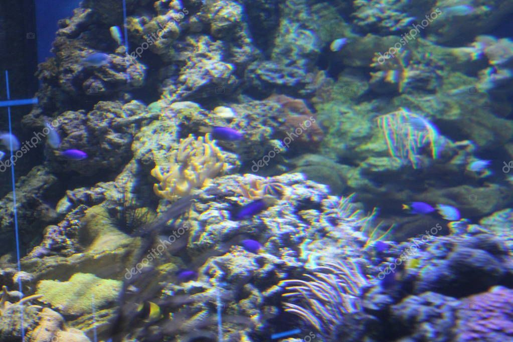 The great Creator created so many beings! And on land, and on water and under water! And much remains a mystery! coral fish