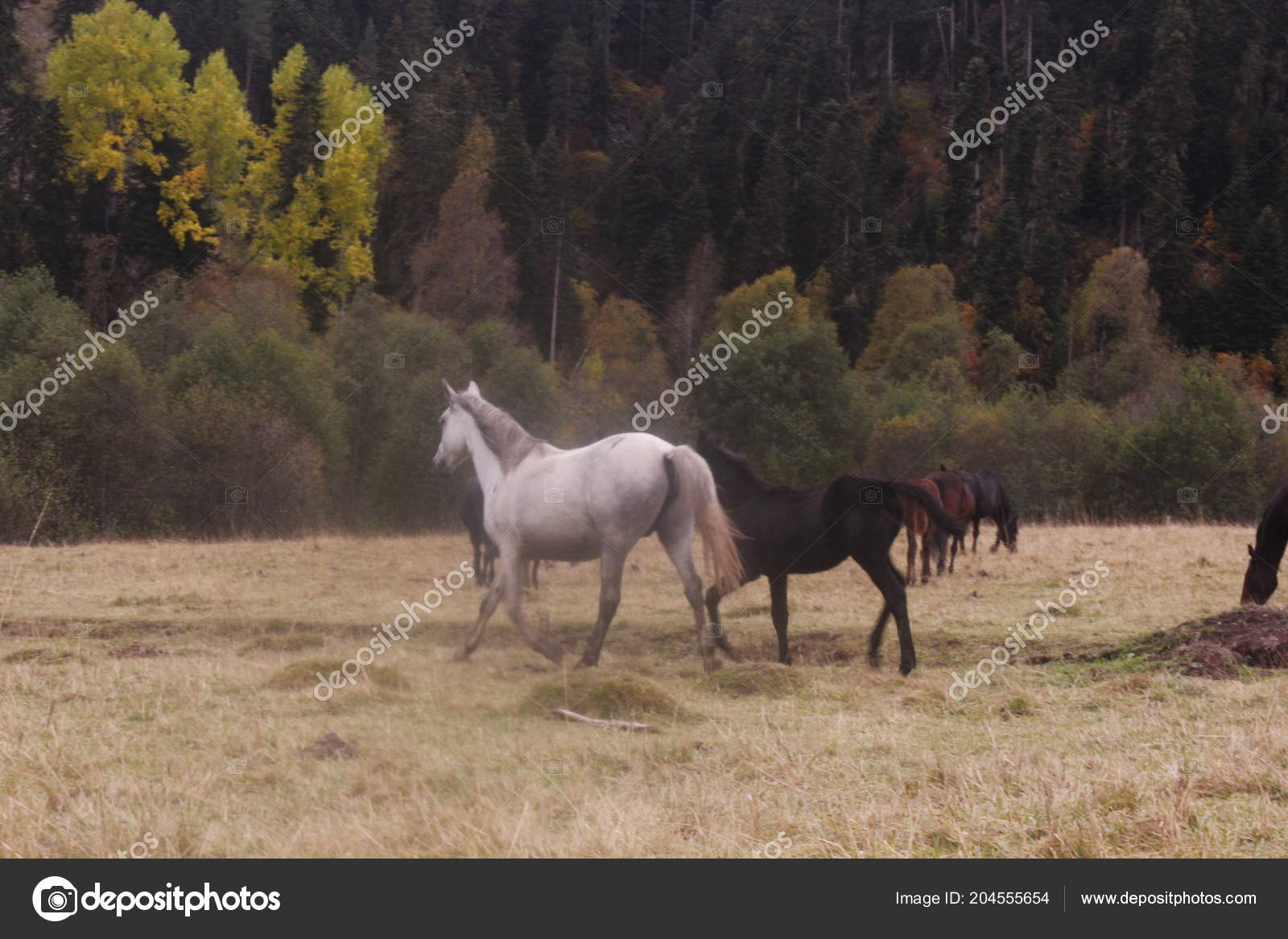 Horses One Most Beautiful Creatures Planet Stock Photo C Katrinakap 204555654