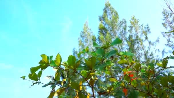 a zöld levelek természetes háttér
