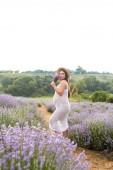krásná usmívající se těhotná žena v bílých šatech čichání květy levandulové pole