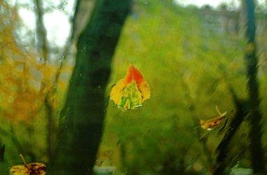 a fallen leaf on a car window