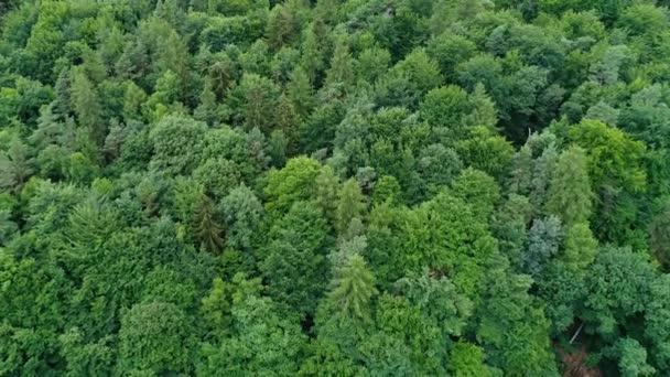 Luftaufnahme eines Waldes - Kamerafahrt