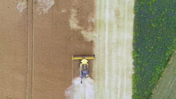 Pšeničné pole a svíce-anténní výhled, bzukot
