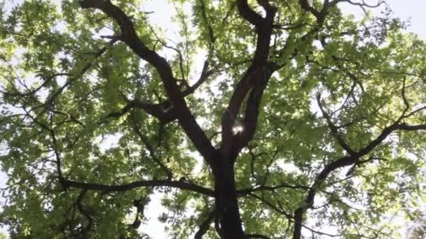 Záblesky slunce mezi větvemi stromů