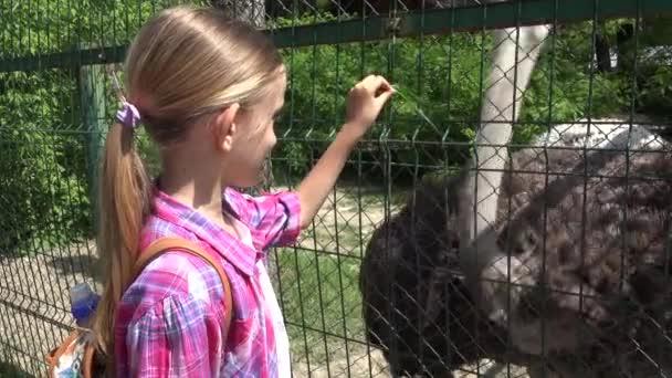 Kind im Zoo Park, Mädchen füttern Strauß, Kinder lieben Stilltiere, Haustiere Pflege