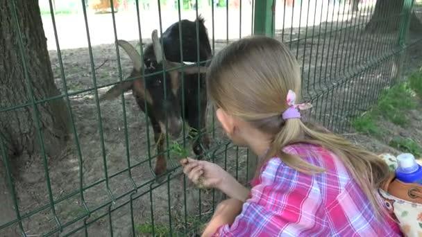 Kind im Zoopark, Mädchen füttern Ziegen, Kinder lieben Stilltiere, Haustiere Pflege