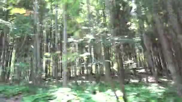Video B218690312