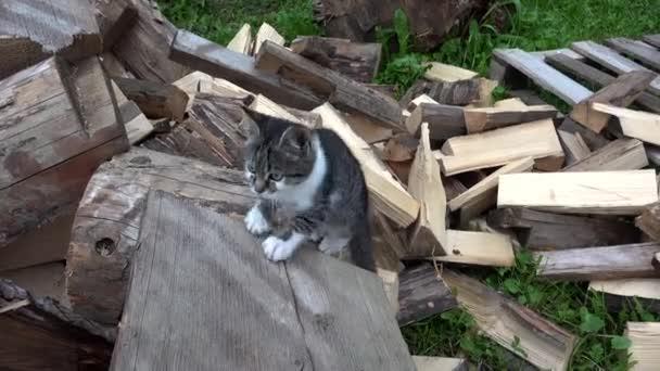 Farm kert, cica keresi a kamera, kertben ülve a Pussy Cat macskák