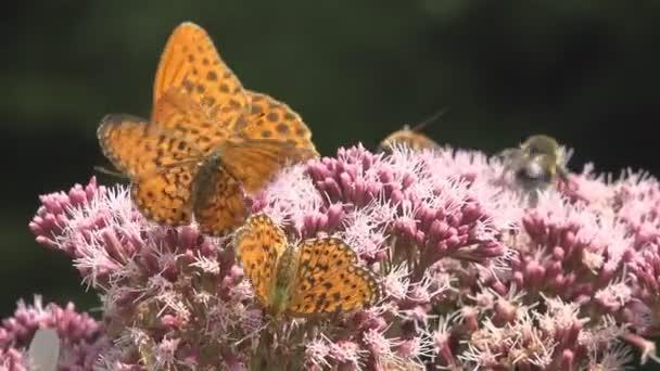Létající motýli, motýl na květ v přírodě, manželskou postelí s hmyzem
