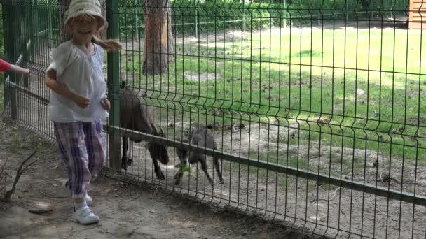 Kind im Zoo Park füttert Ziegenbaby, Kind spielt mit Tieren, glückliches kleines Mädchen im Park