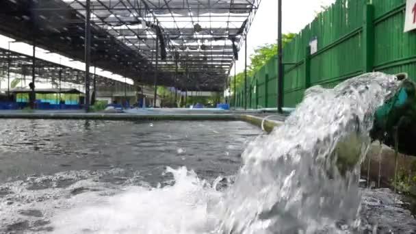 Wasserfluss aus der Wasserpumpe Rohr. Zeitlupe des Wassers sprudelt aus dem Rohr von Koi Teich Karpfen Fischzucht für Sauerstoff.