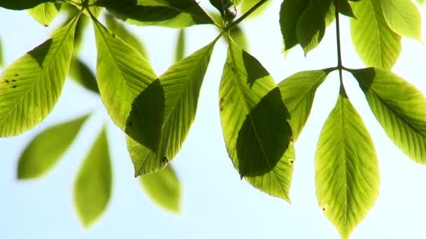 bright green leaves gently moving in the breeze