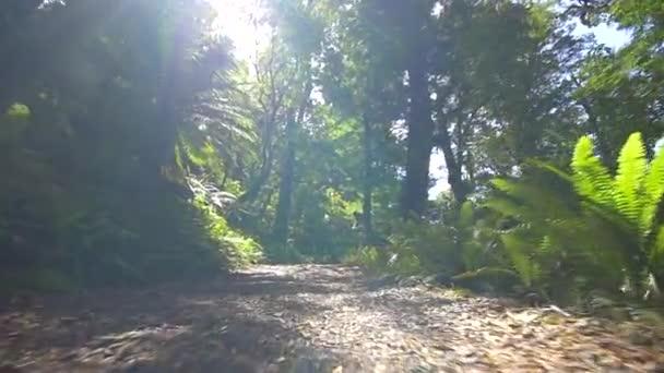 floor of a jungle path