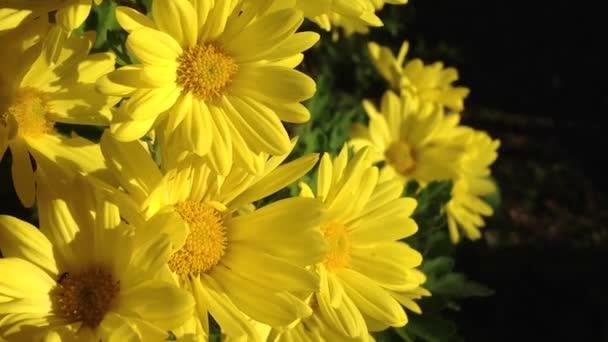 Makró a könnyű szél őszi virágok