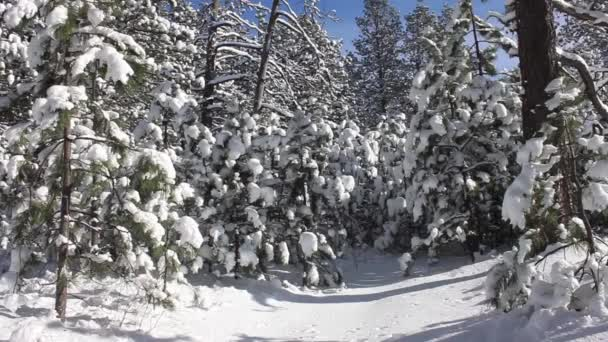 snow laden trees in the mountains
