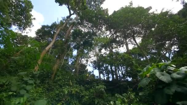 Tropical rainforest tree tops