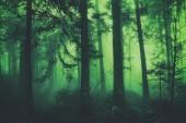 Tmavě zelená fantasy barevné pohádkové foggy lesní strom krajina