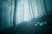 Fotografie Zasněný tmavě modrá zelená barevné foggy lesní stromy krajina s cestou