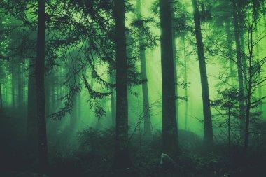 Fantasy dark green colored fairytale foggy forest tree landscape