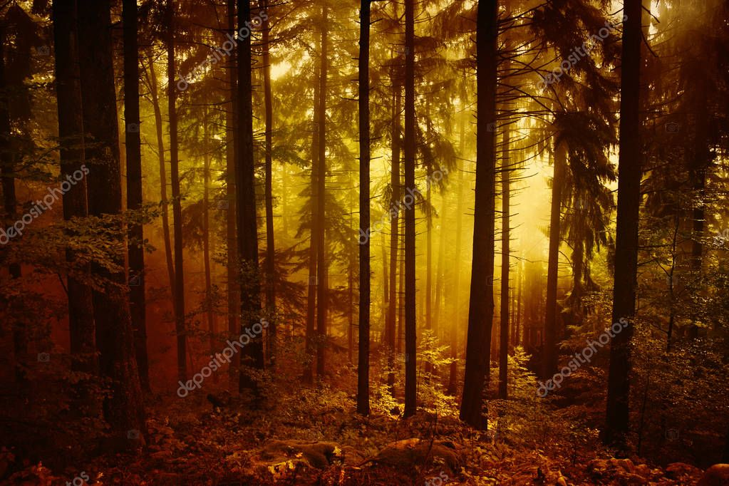 Magical morning orange red colored foggy forest tree landscape