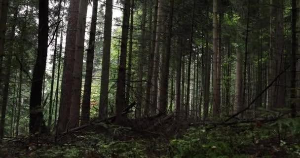 Elvarázsolt erdő-rét, fák, fű, moha