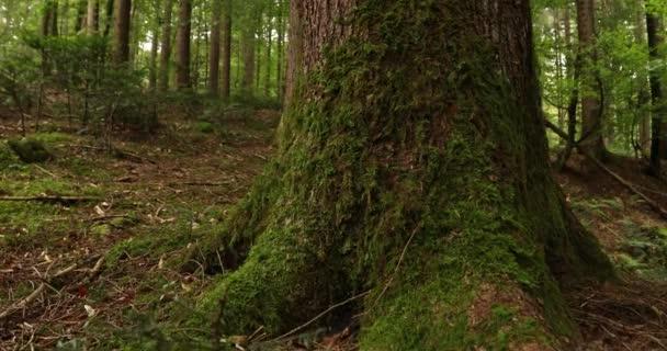 Kouzlo lesní louka s stromy, tráva a mech