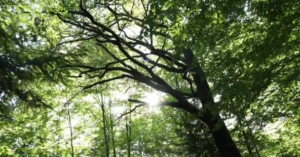 Amazing green leaves in motion with sun rays