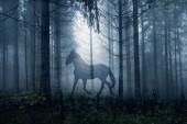 Ló sötét mese fantasy erdei környezetben. Dupla expozíció technikát használják.