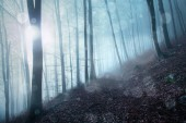 Fantasy bokeh a mese ködös erdő táj fény.