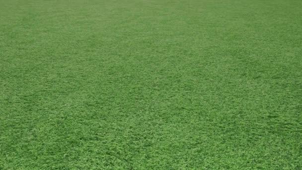 Fussball Auf Dem Fussball Feld Rasen Walzen