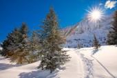 Fotografie Bäumen fallenden Neuschnee in den Alpen. Atemberaubende Winterlandschaft