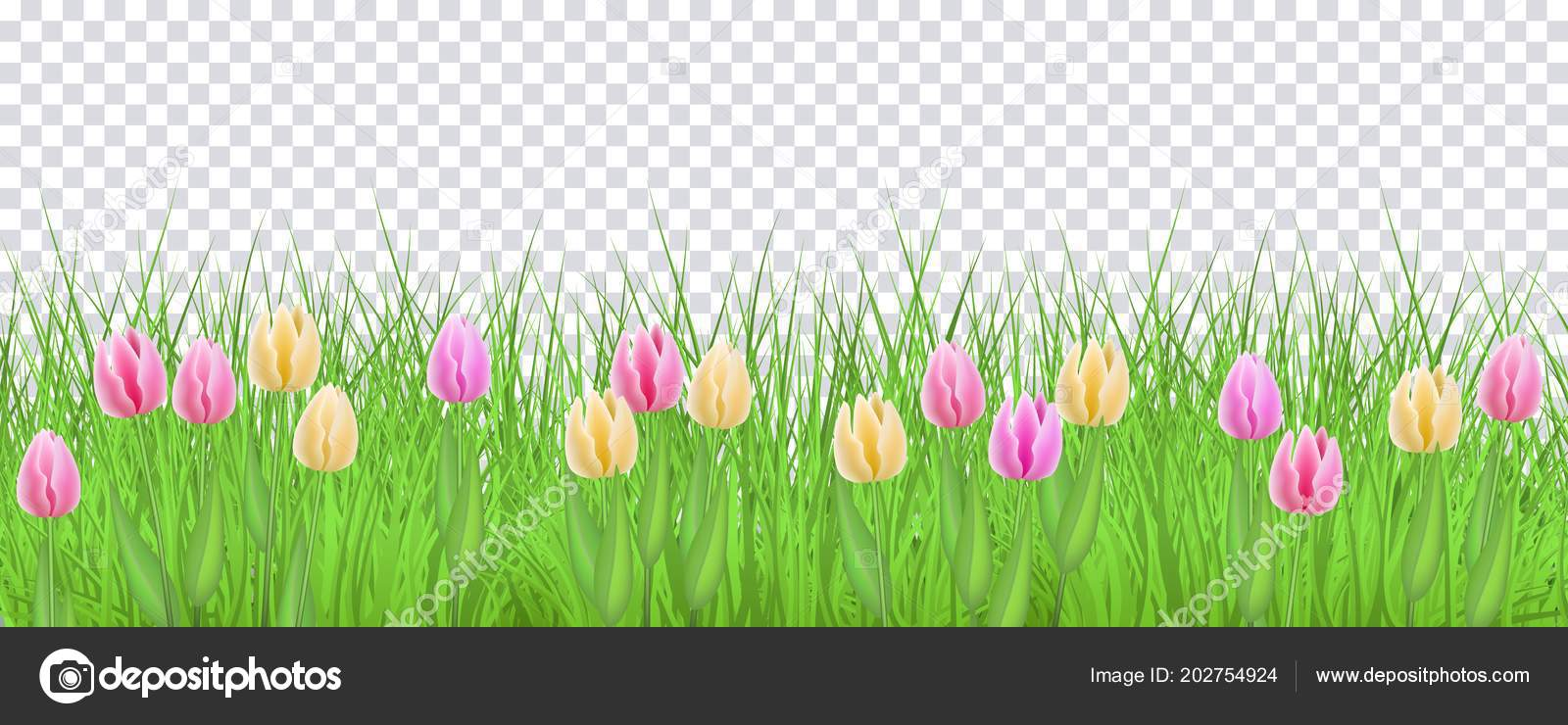 Spring Floral Border With Colorful Tulips On Green Grass On