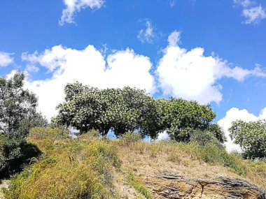 background of hill with trees and grass under a beautiful blue sky with unique white clouds